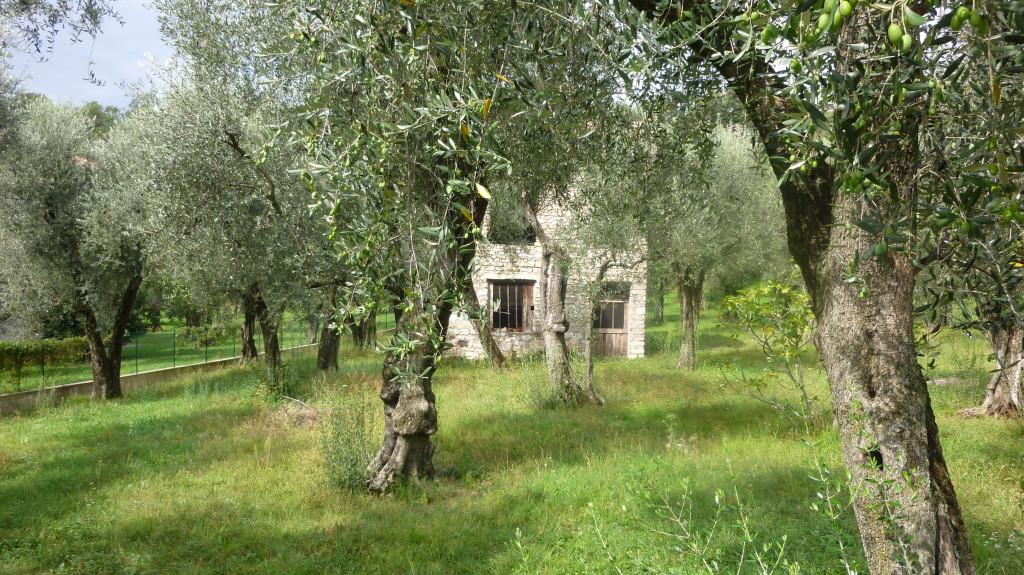 Oberhalb von Malcesine, toller, verwilderter Garten ...