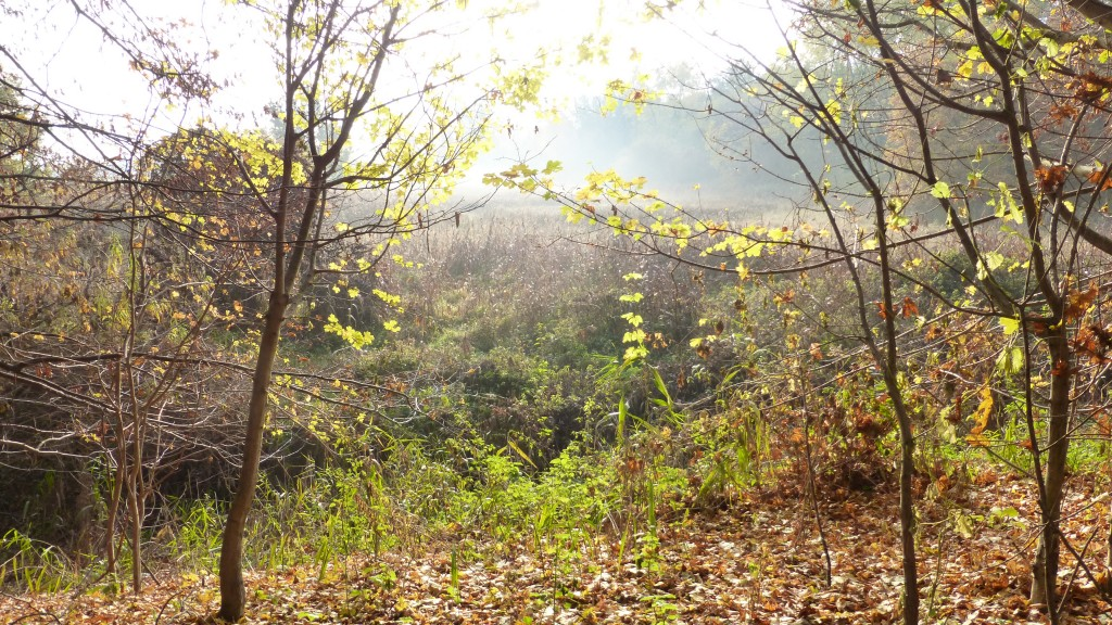 Nebel Richtung Blankenfelde